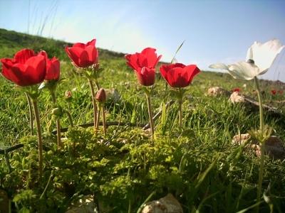 انتهى الشتاء الاعتدال الربيعي