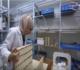 أردنية تحضّر منتجات التجميل من العسل