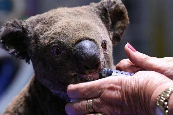 مليون دولار أسترالي تبرعات لكوالا!