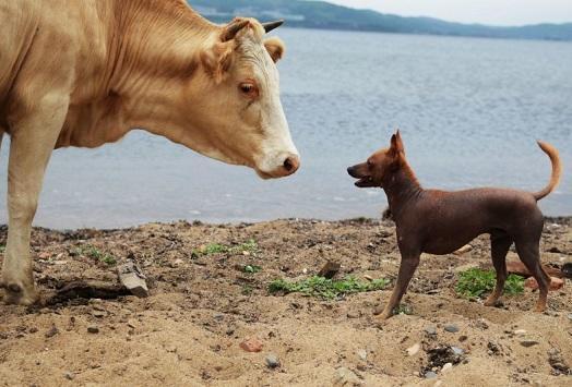 حيوانات تستطيع إيقاف الحمل مؤقتا