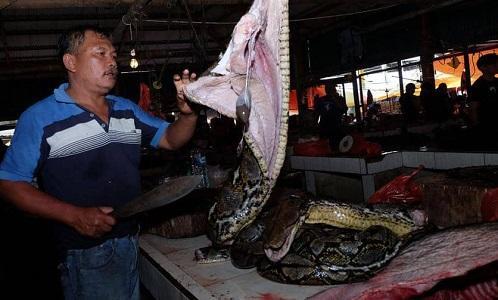 الأردن يوقف استيراد الحيوانات الصينية