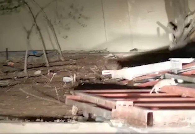 زريقات يعلق على فيديو انتشار القوارض