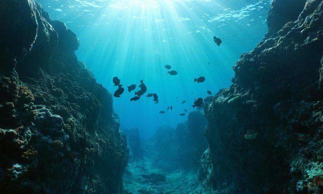 الكشف عن زاحف بحري مخيف