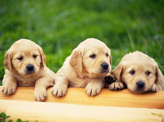 كشف أصل الكلاب وكيف انتشرت حول العالم