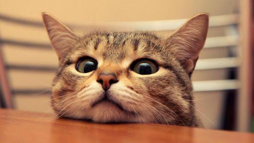 حفل عيد ميلاد قطة بتسبب بإصابات بكورونا