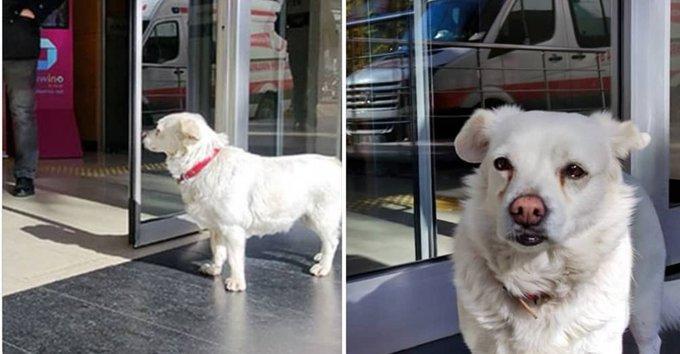 كلبة تنتظر صاحبها المريض أمام المستشفى 6 أيام