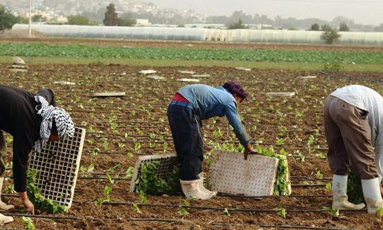 تخفيض رسوم تصاريح العمل للزراعة والمخابز