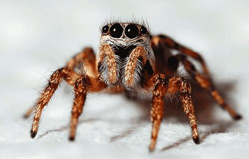 دراسة حديثة تكشف مضاعفات للدغة العنكبوت