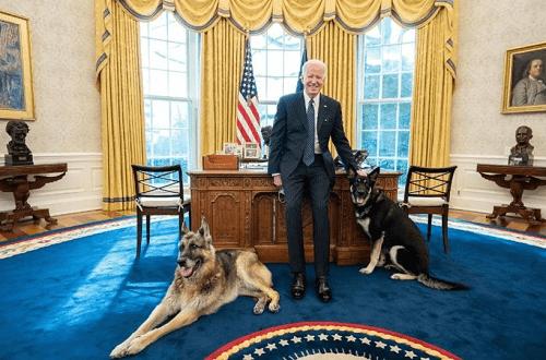 بايدن بنشر صورته مع كلبين في المكتب البيضاوي