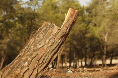 زراعة العقبة تضبط 18 مخالفة قطع للأشجار