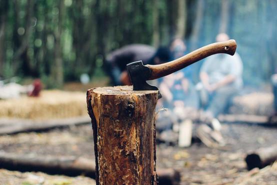 العقبة : ضبط 18 مخالفة قطع للأشجار خلال عام
