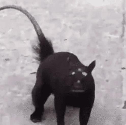 حيوان بثلاثة عيون يثير ذهول المنصات
