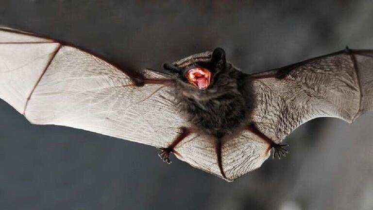تحذير من مرض جديد قاتل سببه الخفافيش