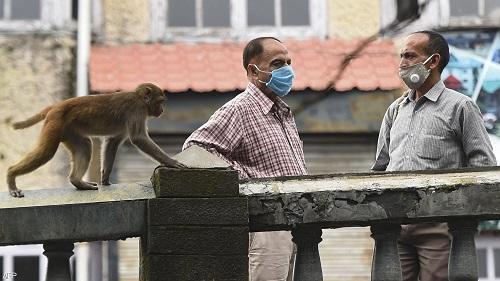 توقيف رجلين في الهند استخدما القردة لسرقة المال!