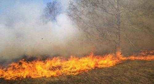 إخماد حريق أشجار مثمرة في جرش