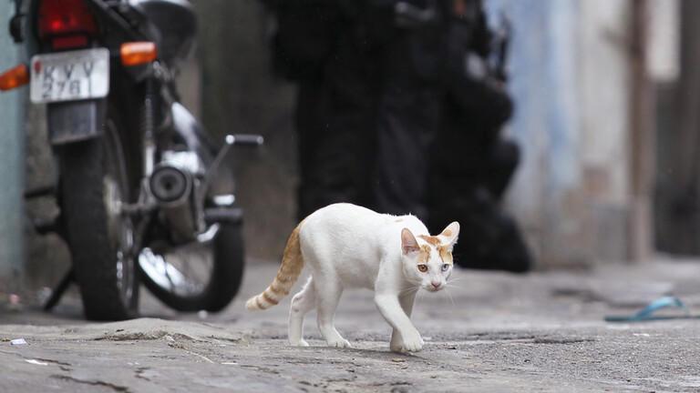 القبض على قط حاول تهريب مخدرات الى سجن - فيديو