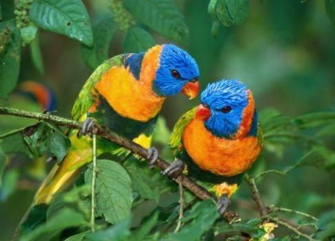 دراسة: مراقبة الطيور تسعد البشر أكثر من المال