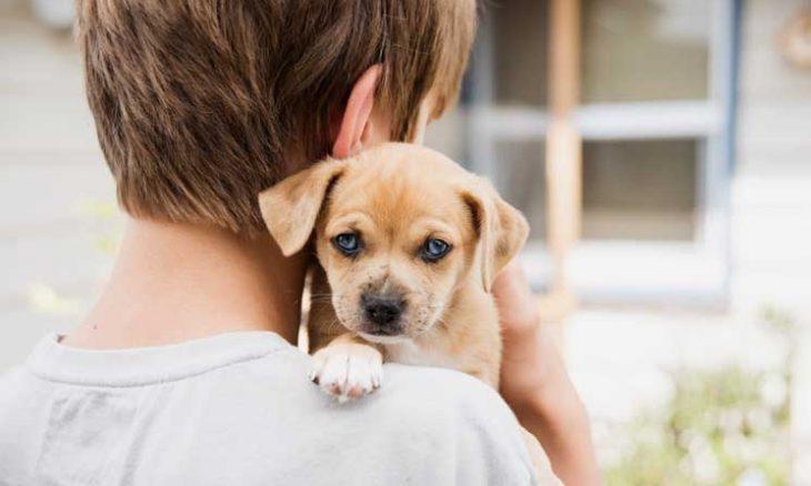 إسبانيا: قانون مقترح لرعاية الحيوانات بالتناوب عند الطلاق