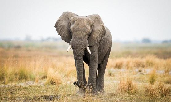 فيل يرفع دعوى على حديقته