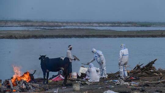 الهند.. شباك في نهر الغانج لالتقاط جثث المتوفين بكورونا