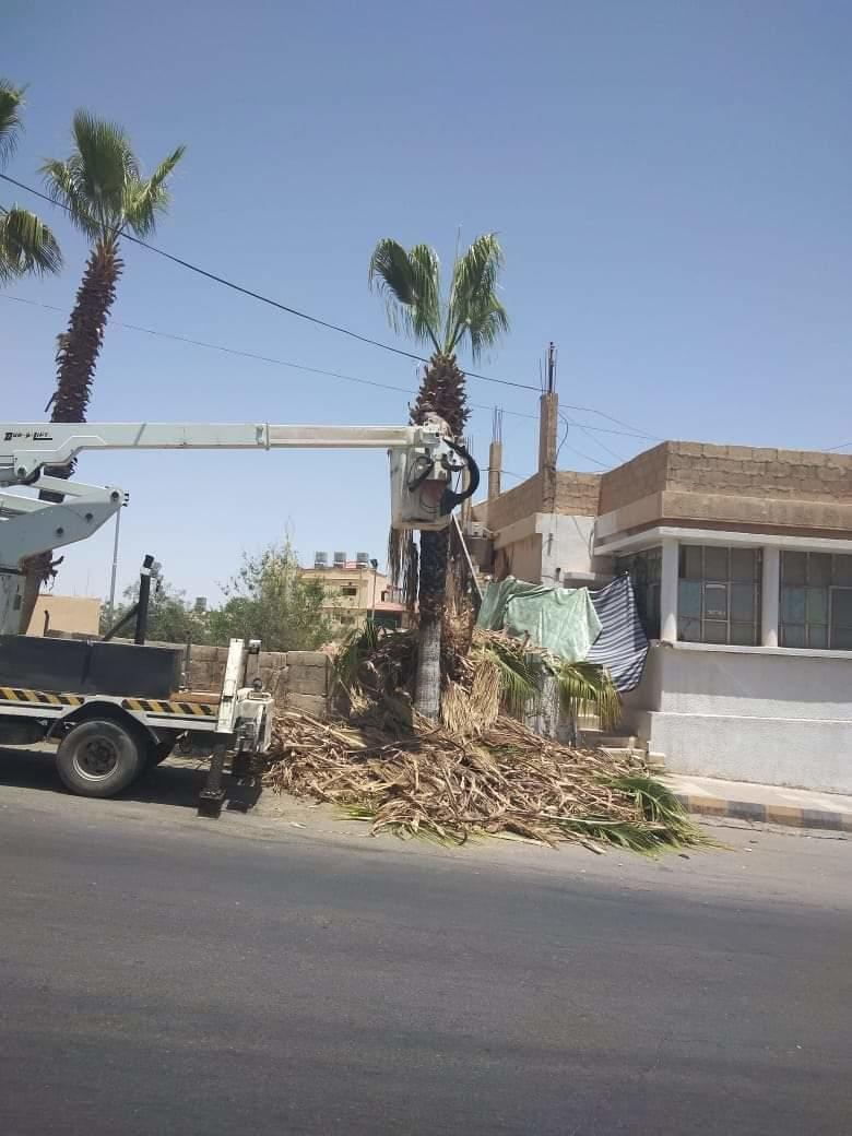 حملة في الطفيلة لتجميل الشوارع وتشذيب اشجار الزينة
