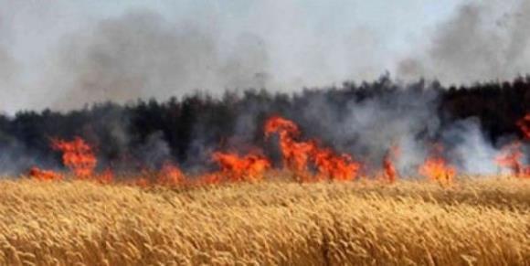 147 حريق اعشاب بالاردن الاحد