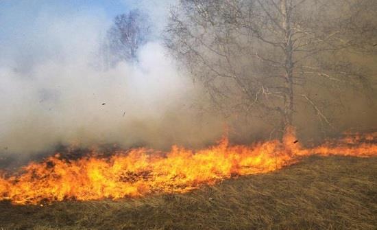 حريق يأتي على 40 دونما في اربد