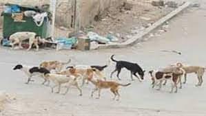 منع تصفية الكلاب الضالة يستلزم بدائل لاتقائها