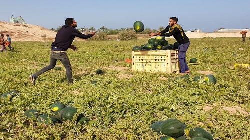 السماح لغزة بتصدير محدود لمنتجاتها