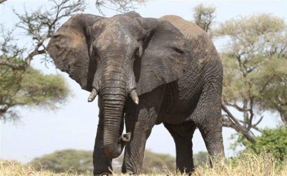فيل يخترق جدران منزل بحثا عن طعام في تايلند